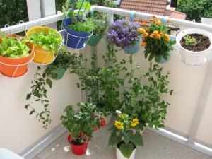 Balkonpflanzen schönm